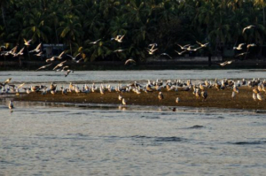 Things to do in Calicut, Kalalundi Bird Sanctuary, Jellyfish Watersports